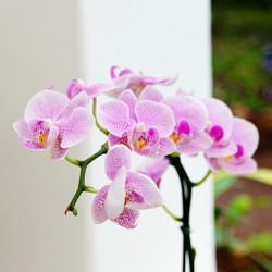 Orchids272050_1280