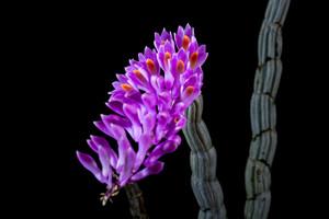 Wildorchid322744_1920